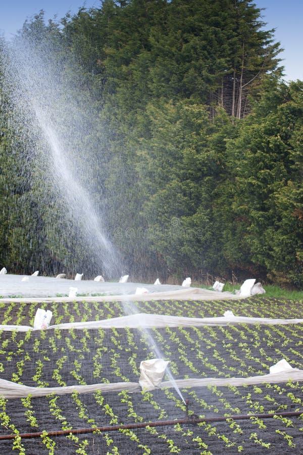 Water gevende gewassen royalty-vrije stock afbeeldingen