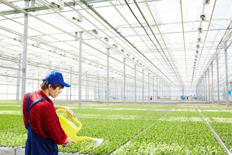 Water gevende groene aanplanting stock foto