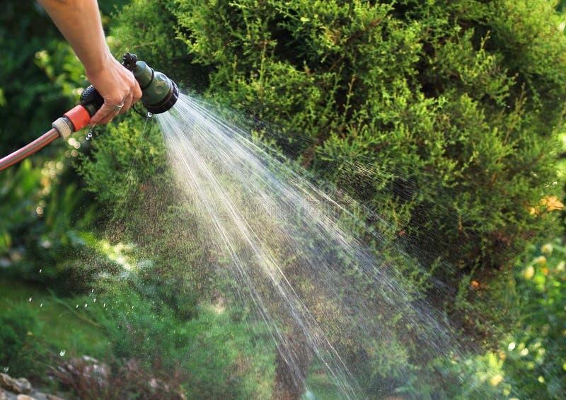 Water gevende tuin royalty-vrije stock fotografie