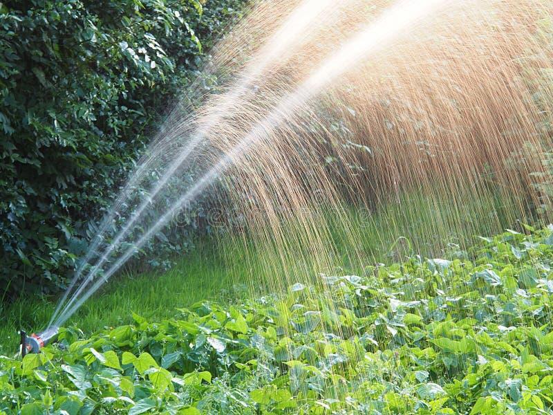 Water gevende tuin royalty-vrije stock afbeelding