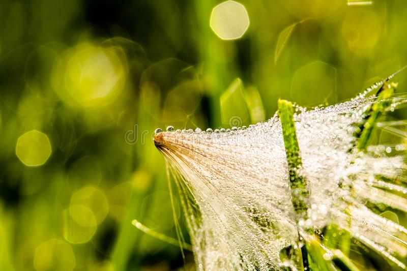 Water, Grass, Dew, Close Up royalty free stock photo