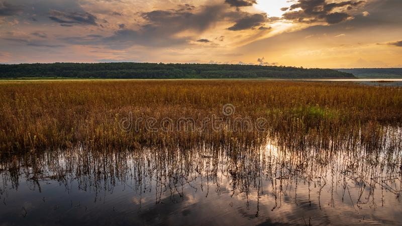 Water grass in lake at sunset stock images
