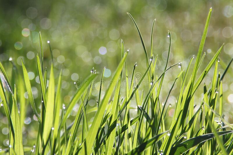Water, Grass, Vegetation, Dew royalty free stock images