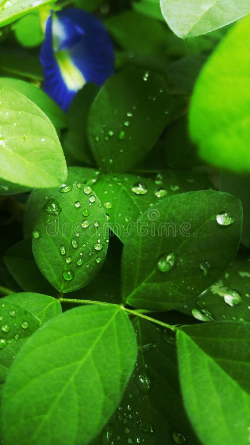 Water, Green, Leaf, Dew royalty free stock images