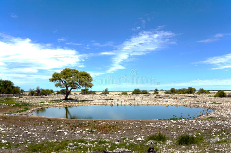 Water hole royalty free stock photo