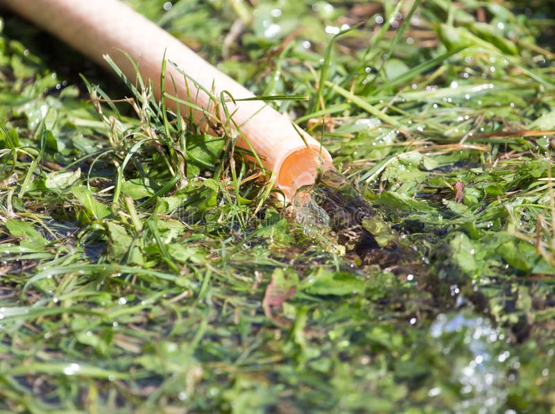 A water hose into the grass stock photos
