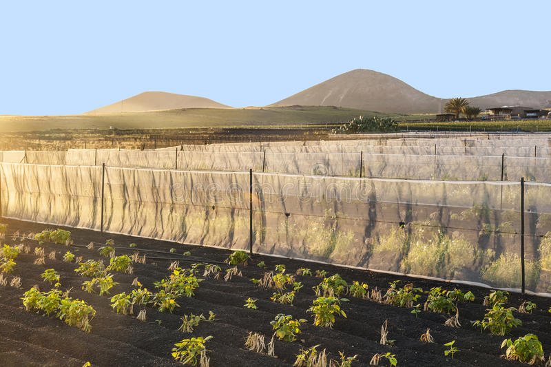 Water irrigation system on a field royalty free stock images