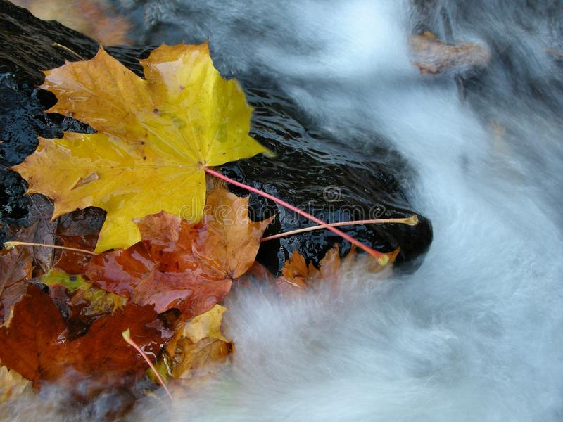 Water, Leaf, Nature, Yellow royalty free stock images