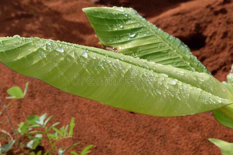 Water on leaf stock photos