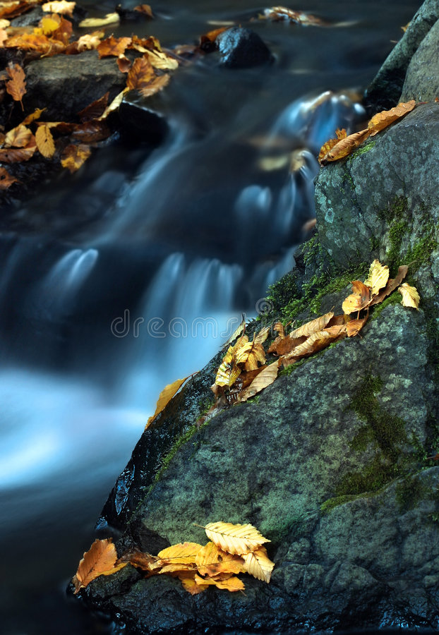 Download Water and leaves 1. stock image. Image of natural, leaf - 538667