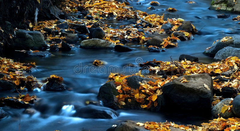 Water and leaves 3. royalty free stock photo