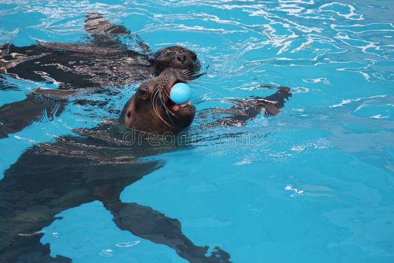 Water, Leisure, Swimming Pool, Swimming stock image