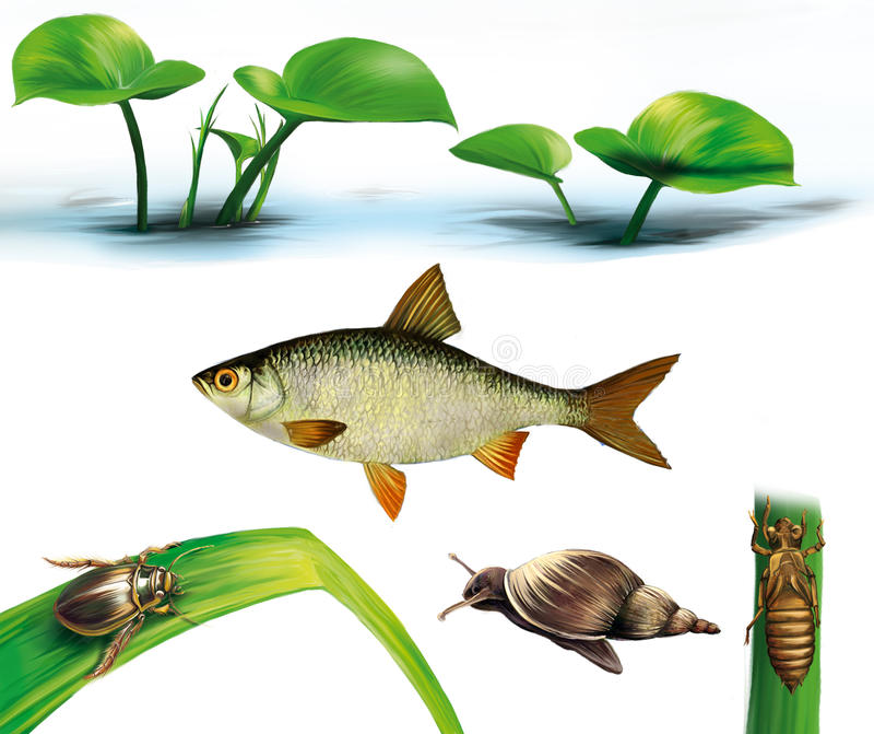 Water bug, snail, dragonfly, larvae, gudgeon fish vector illustration