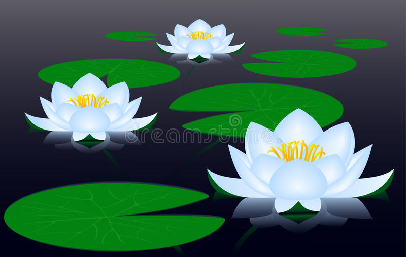 Download Water lilies stock vector. Illustration of alga, dusk - 22306763