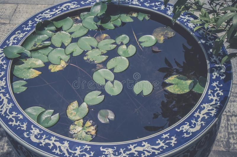 Water lilies in blue and white porcelain vats. Water lilies in blue and white pottery jars and fire fighting facilities in classical buildings can beautify the royalty free stock photos