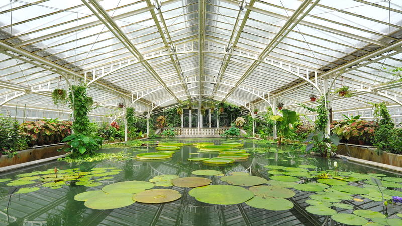 Water lilies and pond in Victoria glasshouse of Munich Botanical Garden. In Germany royalty free stock photo