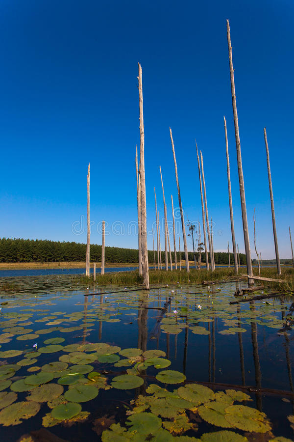 Download Water Lilies Trees Lake Vertical Stock Photo - Image: 25404522