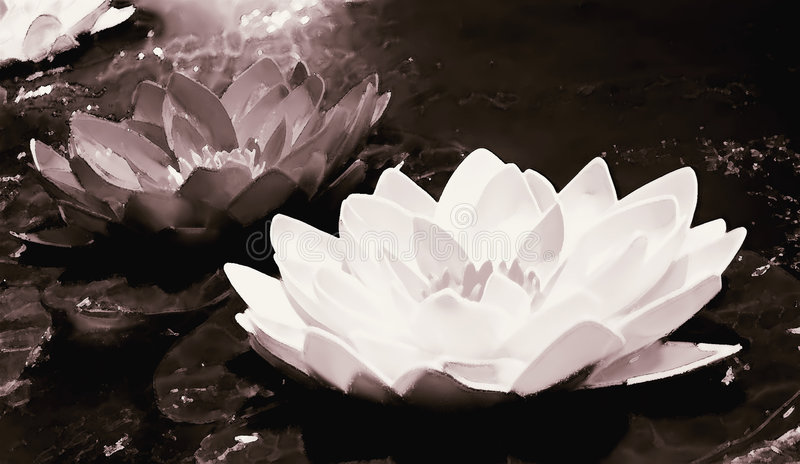 Download Water Lilly stock photo. Image of idea, romance, surreal - 160472