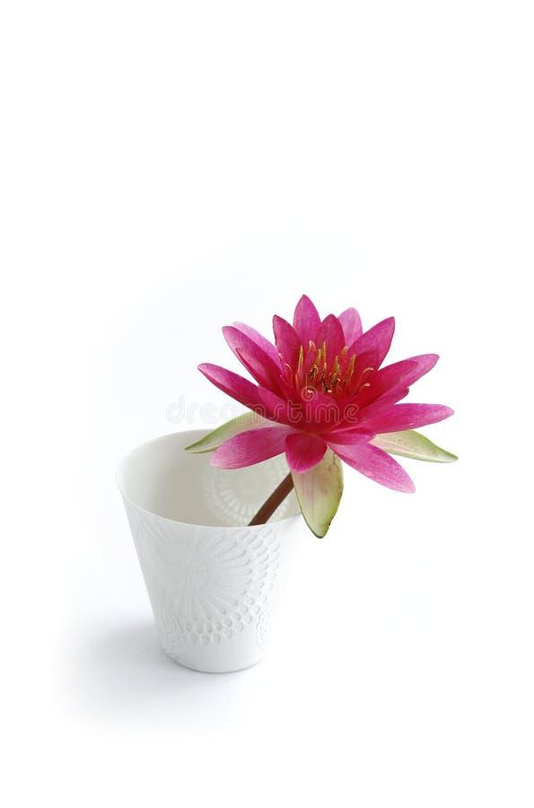 Water lilly royalty-vrije stock fotografie