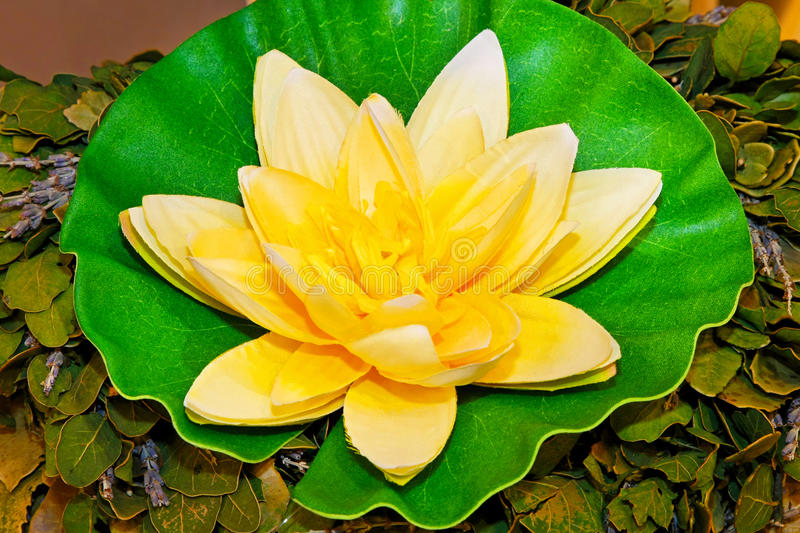 Download Water lily stock image. Image of decoration, pond, decor - 11924769