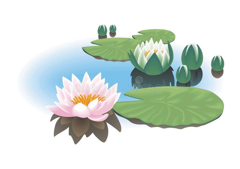 Download Water lily stock vector. Image of background, pond, lotus - 3819280