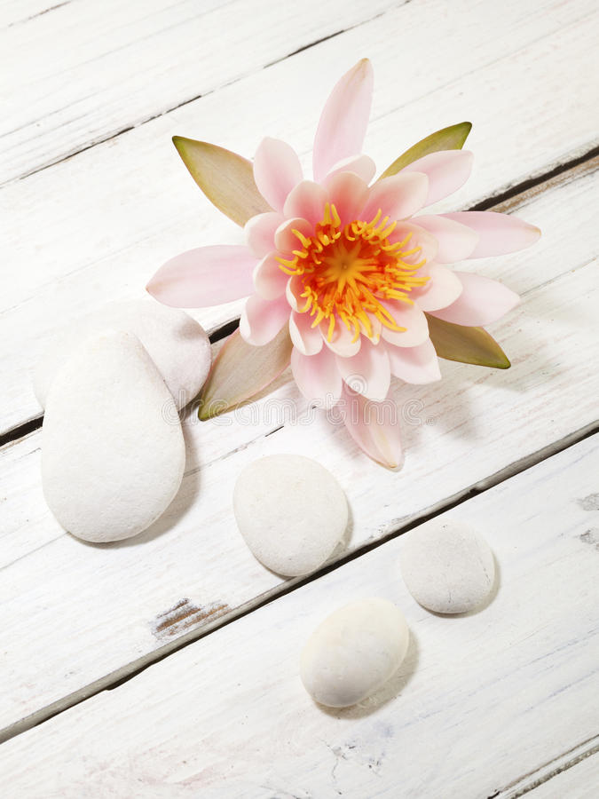 Free Water Lily And Pebbles Stock Photography - 60480702