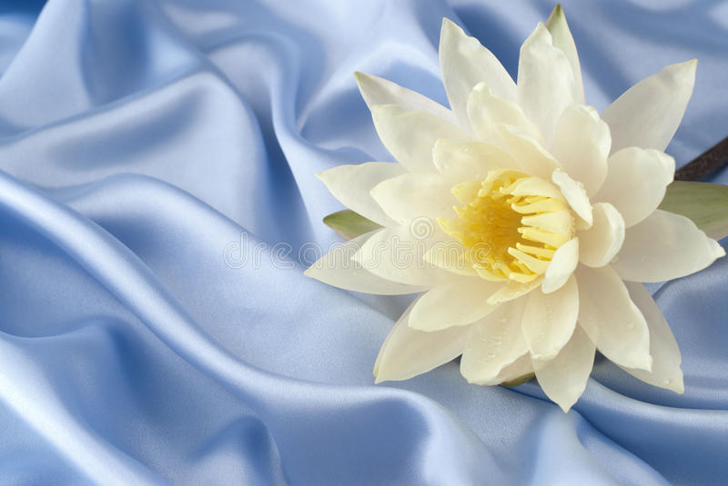 Water lily on blue satin royalty free stock images