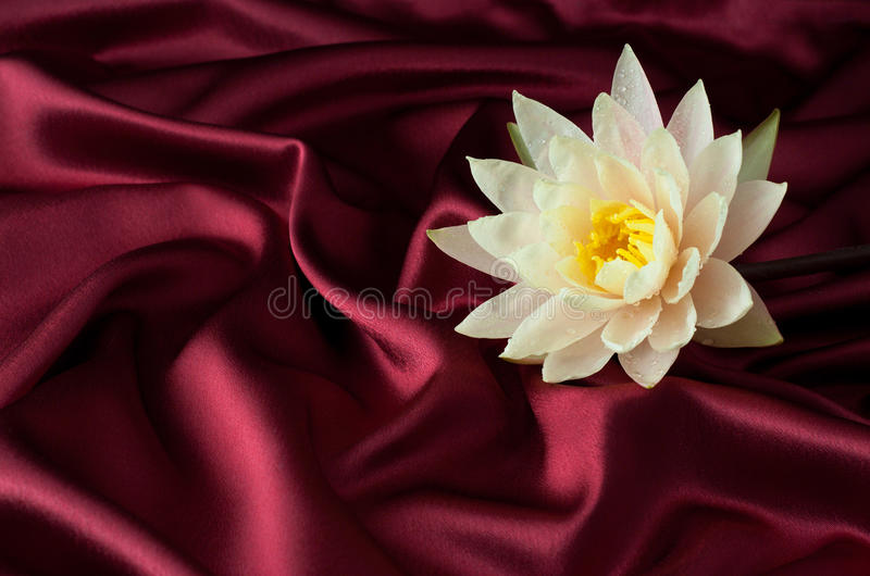 Water lily on burgundy satin stock images