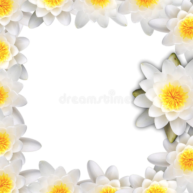 Water lily frame stock photo