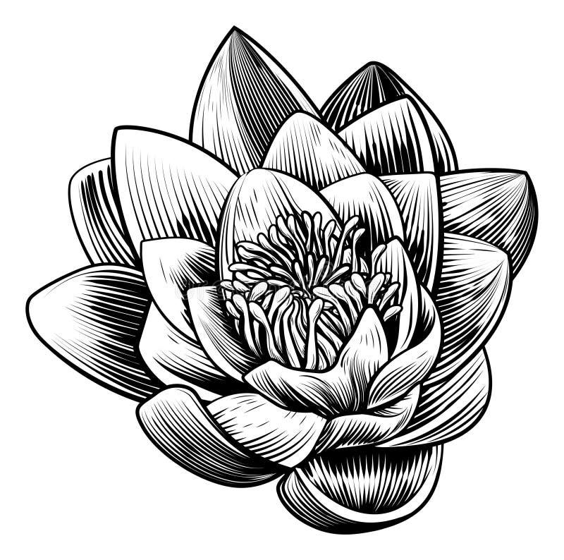 Water Lily Lotus Flower Vintage Woodcut Engraved Etching. A water lily lotus flower in a vintage woodcut engraved etching style vector illustration