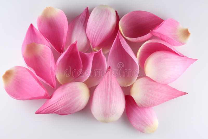 water lily petals closeup stock photo image of backgrounds 45284662