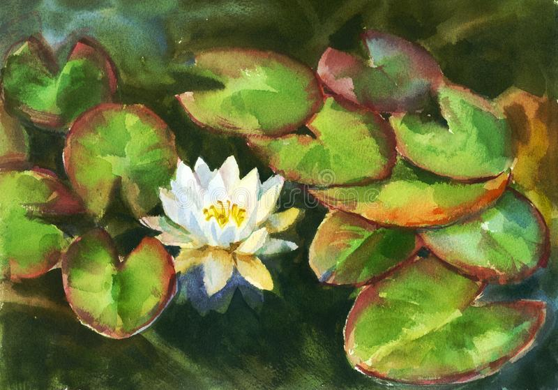 Water lily in the pond. Watercolor sketch from nature stock photos