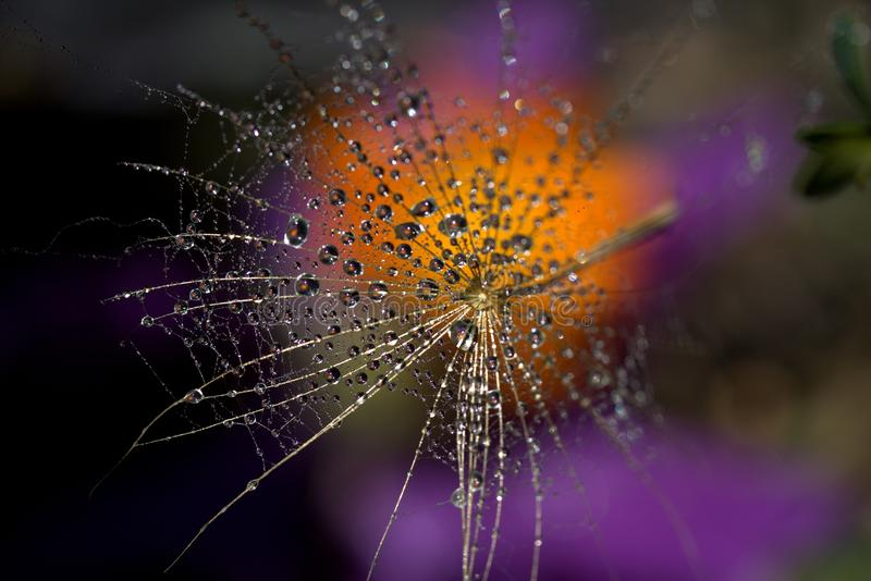 Water, Macro Photography, Spider Web, Purple royalty free stock photography