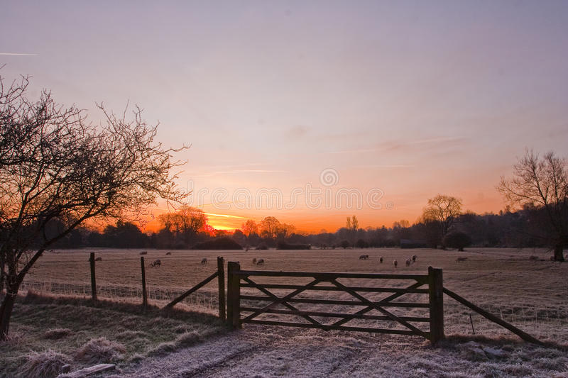 Download Water meadows sunrise. stock photo. Image of dawn, pastel - 23543848