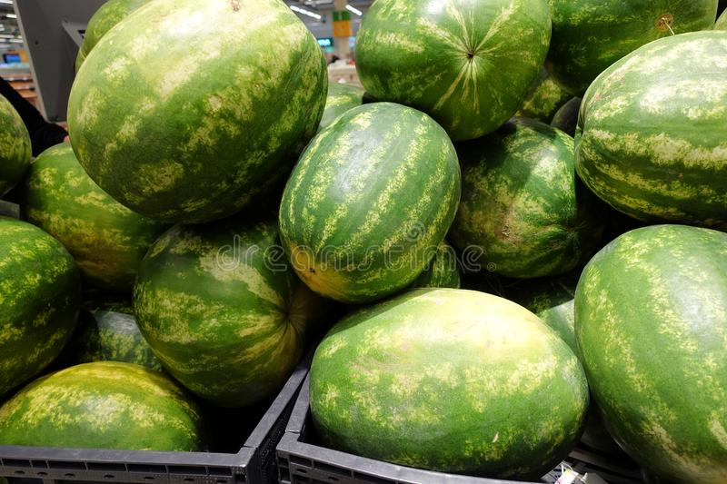Water melon fruit bulk in fresh market, big ellipsoid-shaped and green colored tropical fruit.  royalty free stock image