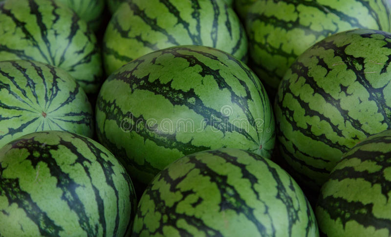 Water-melons royalty free stock photos