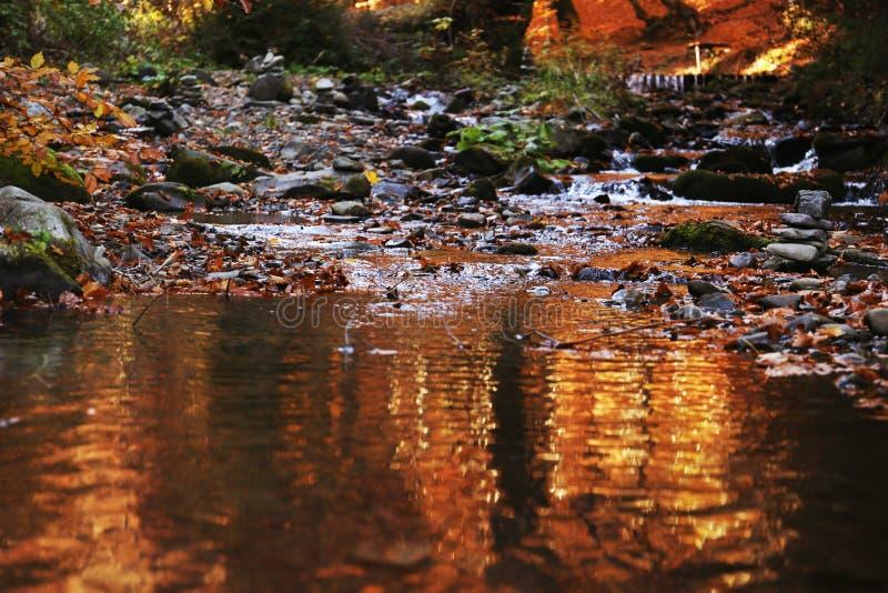 Water met gevallen bladeren stock afbeelding