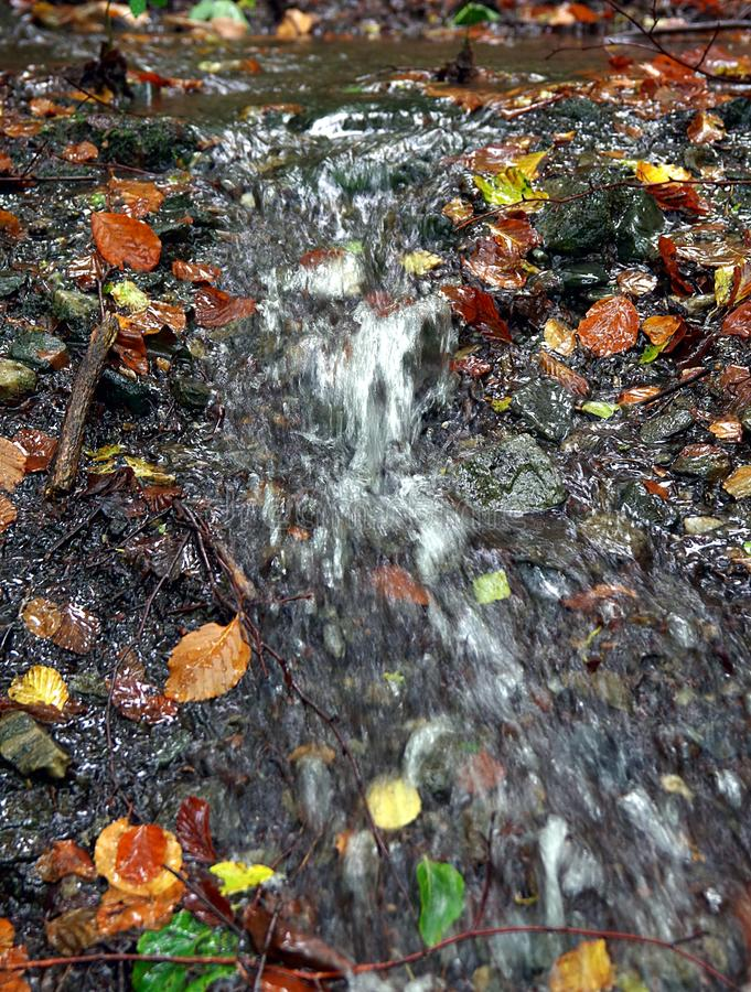 Water, Nature, Leaf, Stream royalty free stock photography