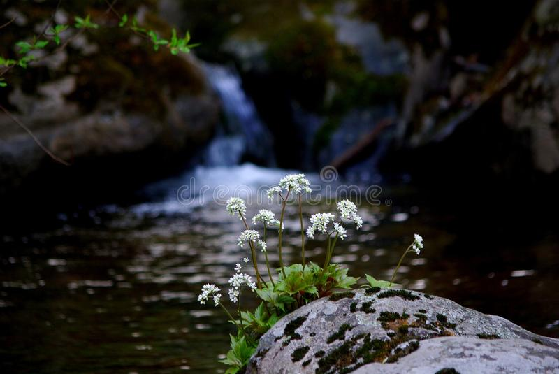 Water, Nature, Stream, Watercourse stock images