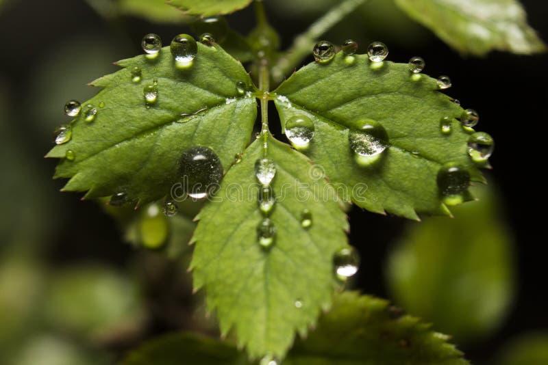 Water op blad royalty-vrije stock foto