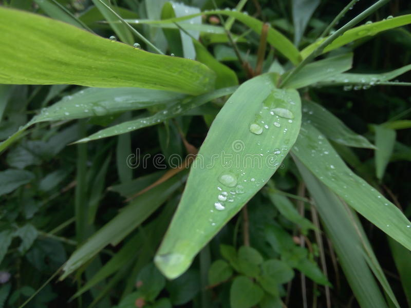 Water op blad stock foto