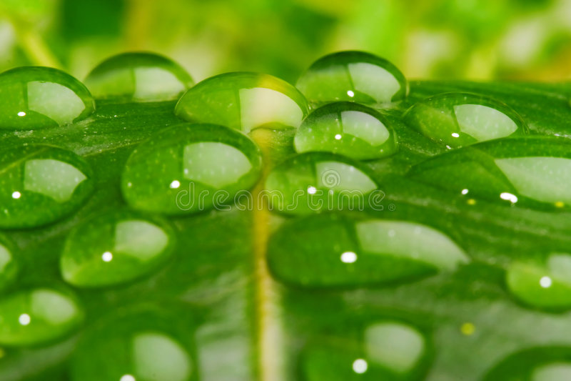Water op bladclose-up stock afbeelding