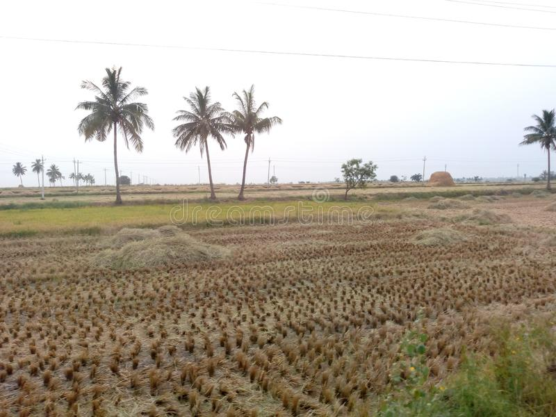 A Water plant surface irrigation farm. Irrigation helps to grow agricultural crops, maintain landscapes, and revegetate disturbed soils in dry ares and during stock image