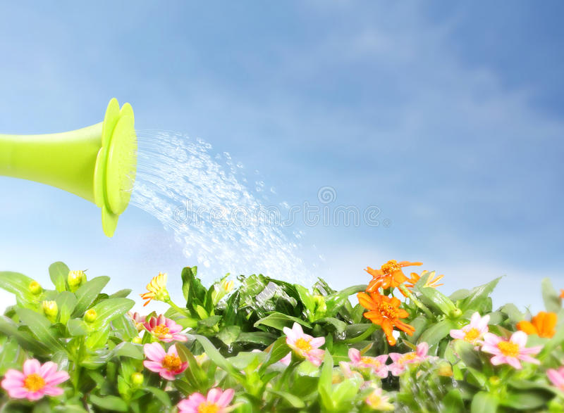 Water pouring watering flower royalty free illustration