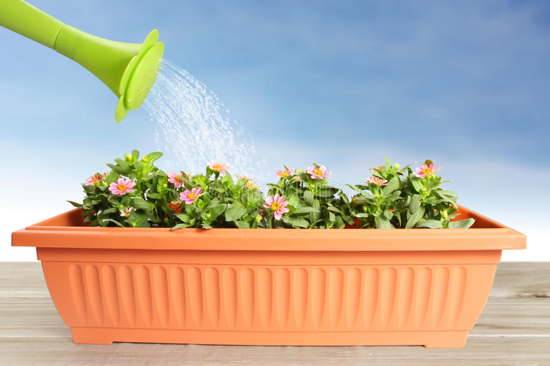 Water pouring watering flower stock illustration