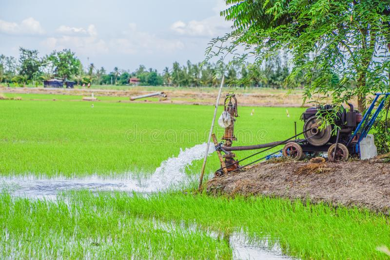 Water Pump - Powerful Water Flowing from a Large Pipe Pump in Rice Field at Countryside in Center of Thailand, The way of farming. Of Thai farmers, Green stock images