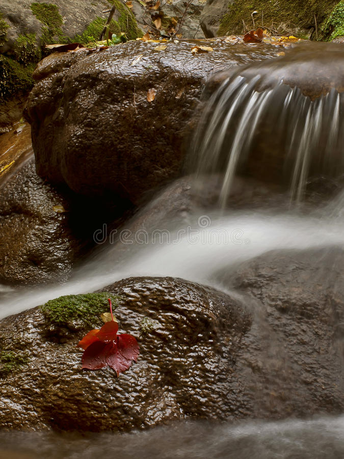 Water and red leaf 2 royalty free stock image