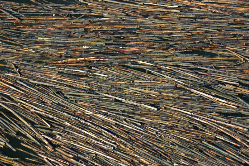 Water Reeds 2 royalty free stock photo