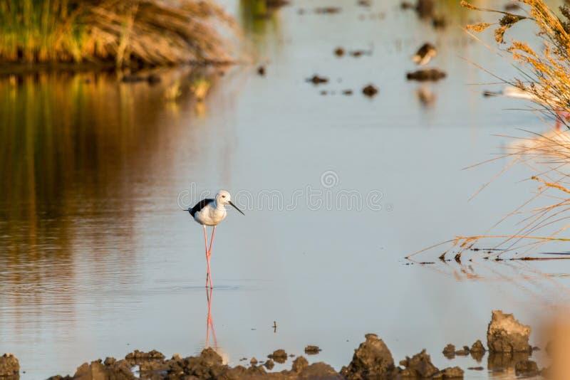 Water, Reflection, Bird, Fauna Free Public Domain Cc0 Image