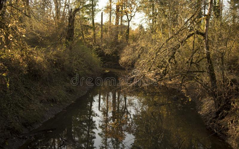 Water reflection, calm and peace, safety, meditation, zen state of mind. Water reflection in the all Golden Forest, calm and peace, safety, meditation, zen state stock photography
